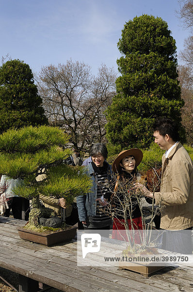 Junges Paar betrachtet Bonsais im Botanischen Garten in Kyoto,  Japan,  Asien