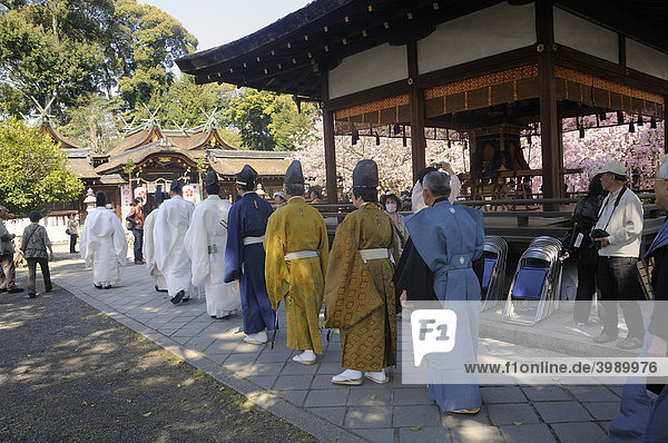 Shinto priests proceed to worship  shrine festival during the cherry blossom at the Hirano Shrine  Kyoto  Japan  East Asia  Asia