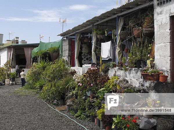 Blumen vor Haus  La Bombilla  La Palma  Kanarische Inseln  Kanaren  Spanien