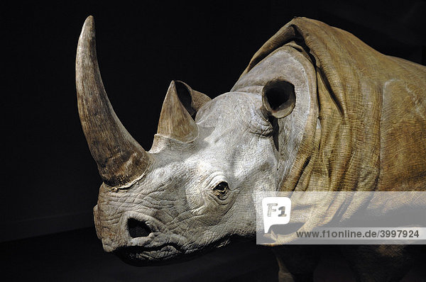 Rhinozeros-Kostüm,  Detail,  für ein Theaterstück 2007 im Victoria & Albert Museum,  1-5 Exhibition Rd,  London,  England,  Großbritannien,  Europa