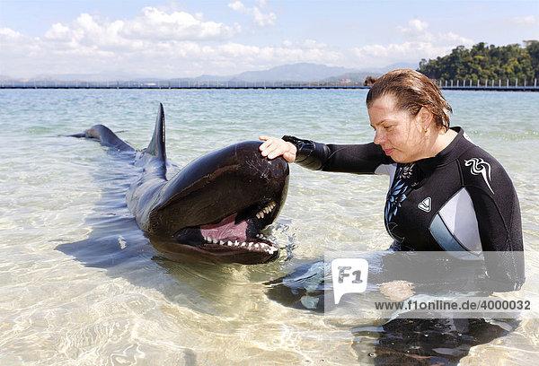 Frau streichelt Kleinen Schwertwal (Pseudorca crassidens)  Flachwasser  Ocean Adventures  Subic Bay  Luzon  Philippinen  Südchinesisches Meer  Pazifik