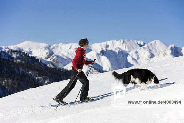 Schneeschuhwanderin mit Border Collie  Plätzwiese  Dolomiten  Südtirol  Italien  Europa