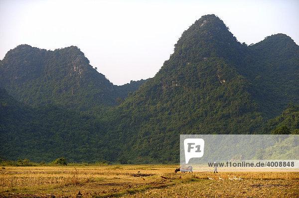 Bauer mit Ochse vor Karstbergen,  Ninh Binh,  Nordvietnam,  Südostasien