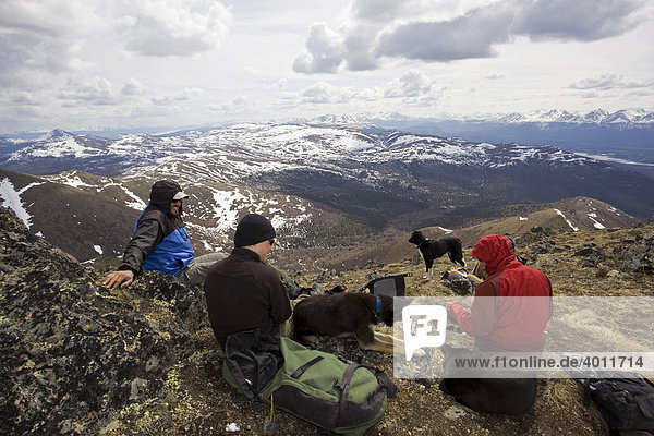 Group of hikers and dogs resting  Mountains  Mt. Lorne  Pacific Coast Ranges behind  Yukon Territory  Canada  North America