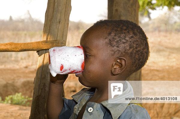 Ein Kind trinkt frisch gemolkene Milch aus einer Tasse in Magoye  Mazabuka  Sambia  Afrika