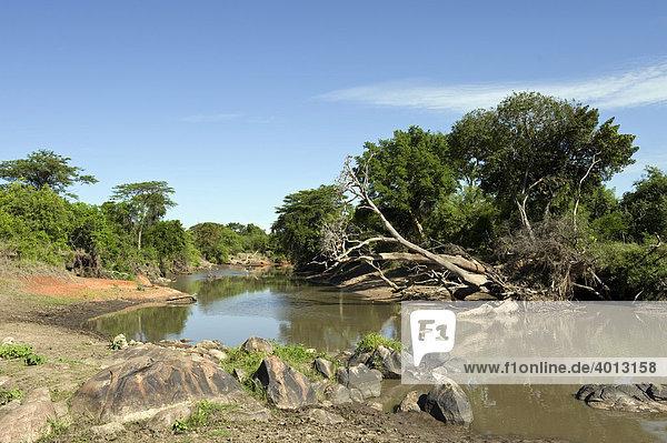 Der Grumeti Fluss  Westlicher Korridor  Serengeti  Tansania  Afrika