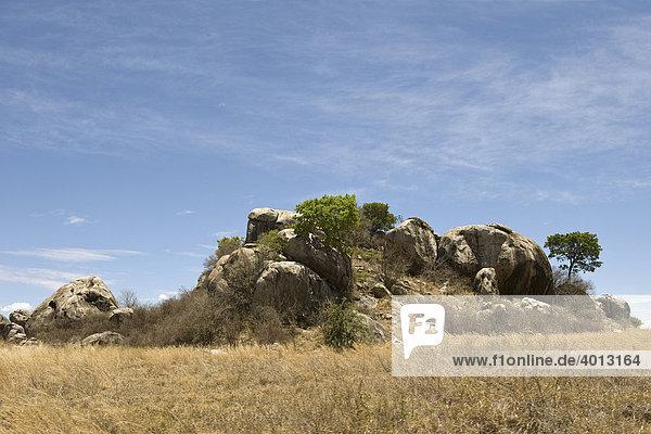 Kopjes Inselberge in der Serengeti  Tansania  Afrika