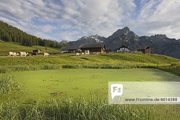 Walder Alm  Nordtirol  Österreich  Europa