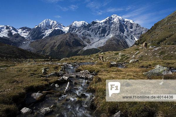 Gebirgsbach  Ortlergruppe  Nationalpark Stilfserjoch  Südtirol  Italien  Europa