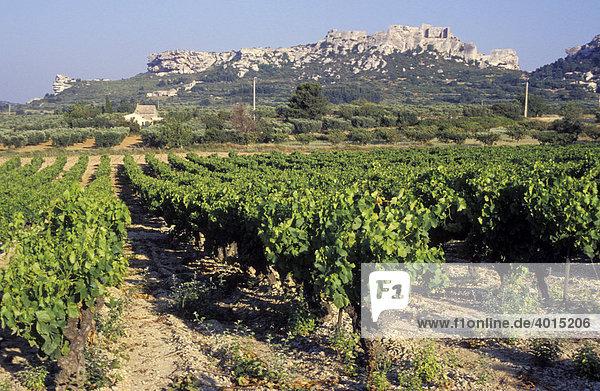 Weinbau bei Les Baux  Provence  Frankreich  Europa
