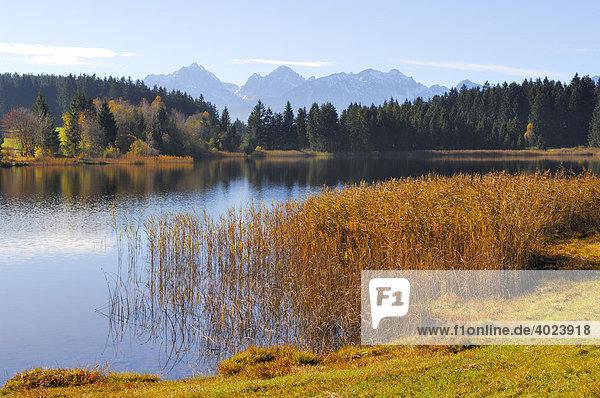 Hegratsrieder See bei Buching  Allgäu  Ostallgäu  Bayern  Deutschland  Europa