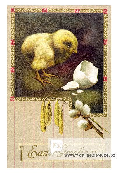 Historische englische Ostergrußkarte  Küken mit Eierschale und Weidenkätzchen  Easter Greetings Historische englische Ostergrußkarte, Küken mit Eierschale und Weidenkätzchen, Easter Greetings