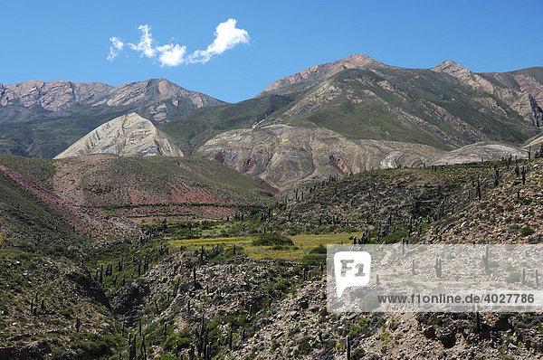 Landschaft bei Tilcara  Jujuy Provinz  Argentinien  Südamerika