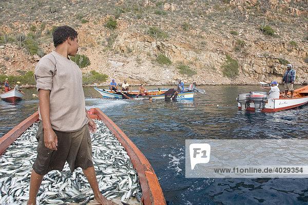 Fischer  Fischfang  Sardinen  Santa Fe  Karibik  Venezula  Südamerika
