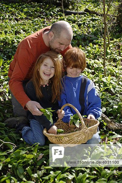 Vater  Tochter und Sohn  mit Korb beim Bärlauch Pflücken im Wald