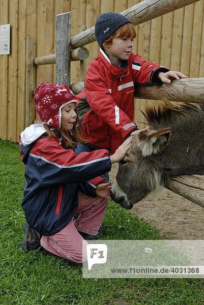 Kinder streicheln einen Esel im Wildpark Oberreith bei Wasserburg  Oberbayern  Bayern  Deutschland  Europa