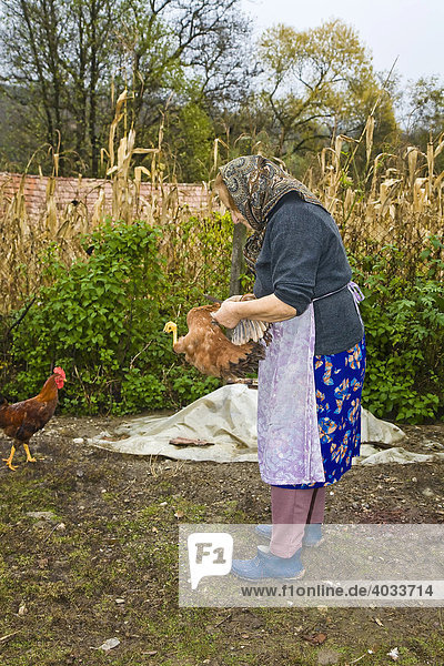 Rumänische Frau mit Kopftuch schlachtet ein Huhn, Bezded