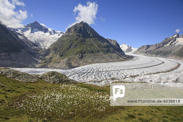 Aletschgletscher  Wallis  Schweiz  Europa
