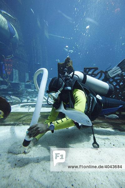 Taucher reinigen permanent das 11-Millionen-Liter Aquarium Ambassador Lagoon mit über 60000 Fischen im Atlantis Hotel The Palm  Dubai  Vereinigte Arabische Emirate  Naher Osten
