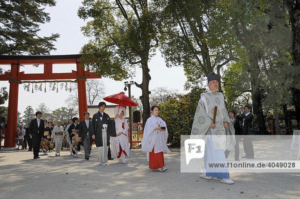 Brautpaar auf dem Weg zur shintoistischen Andacht mit Miko  Tempeldienerin  und shintoisischem Priester im Kamigamo Schrein  Kyoto  Japan  Asien