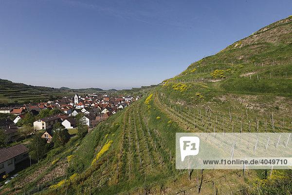 Landschaft im Kaiserstuhl mit Blick auf die Weinberge Oberbergen  Kaiserstuhl  Baden-Württemberg  Deutschland  Europa