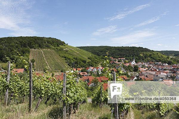 Weinberge in Ramsthal  Rhön  Unterfranken  Bayern  Deutschland  Europa