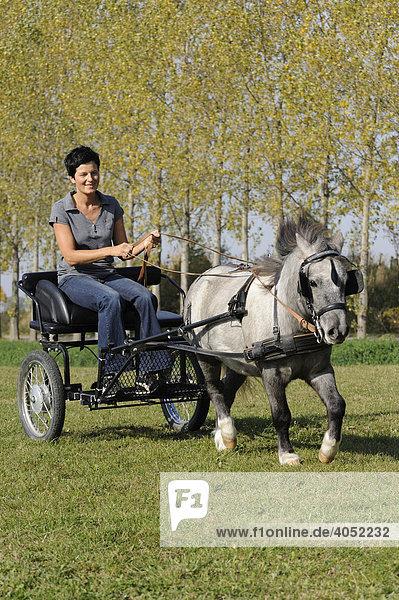Junge Frau fährt Kutsche mit Pony