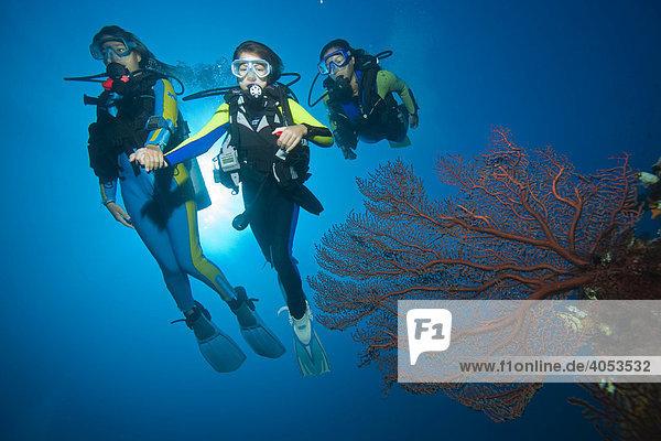 Tauchende Familie hinter einer Gorgonie im farbenprächtigen Korallenriff  Indonesien  Südostasien