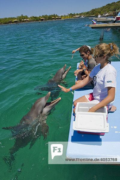Schüler bekommen Biologieunterricht von einem Delphintrainer  Anthony's Key Resort  Roatan  Honduras  Zentralamerika