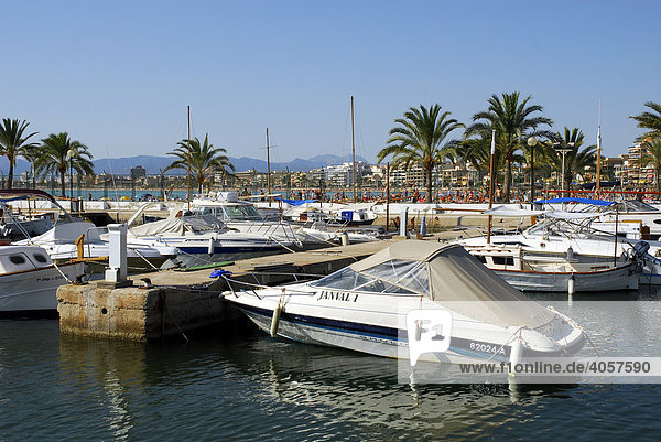 Boats in Club Nautic s'Arenal  marina with palm trees in Arenal  Balearic Islands  Mediterranean Sea  Spain  Europe
