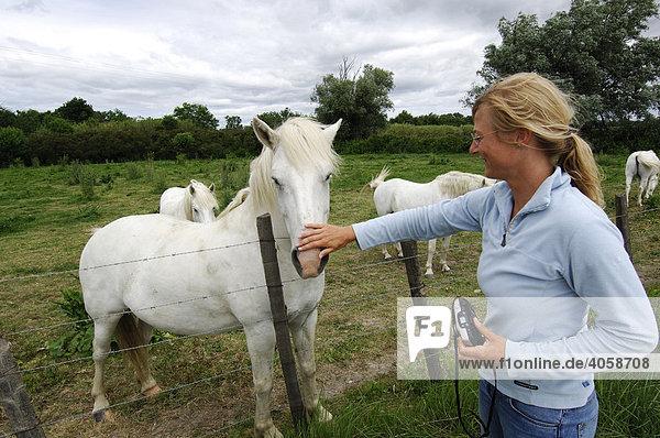 Tourist patting a white Camargue horse  La Camargue  Provence  France  Europe