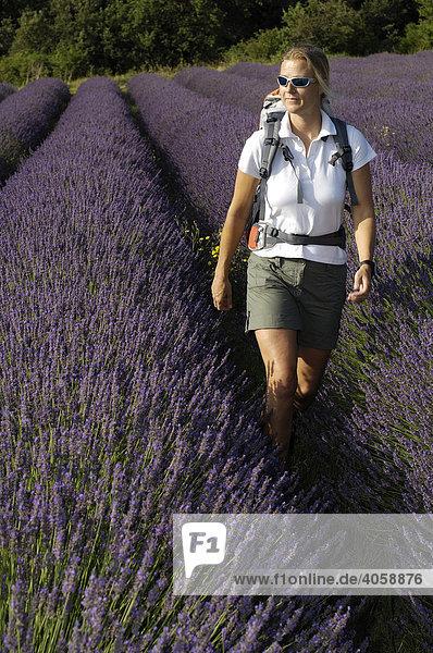 Wanderin  Lavendelfeld  Provence  Frankreich  Europa