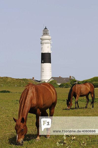 Pferde vor Leuchtturm  Kampen  Sylt  Nordfriesland  Nordsee  Schleswig-Holstein  Deutschland  Europa