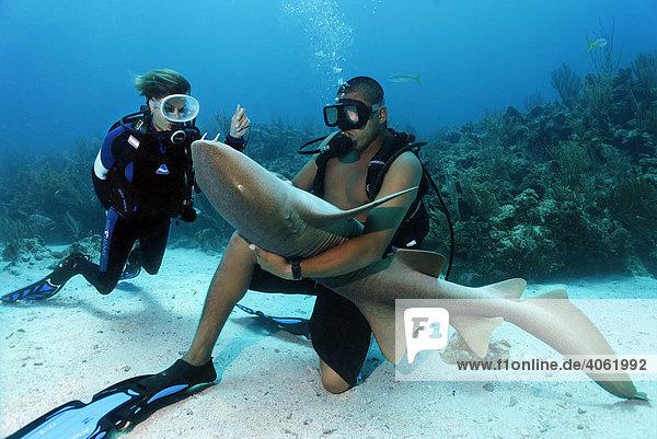 Taucherin beobachtet Tauchlehrer mit Karibik-Ammenhai (Ginglymostoma cirratum)  spezielle Berührung auf Unterseite lässt Hai in Apathie fallen  Barriereriff  San Pedro  Insel Ambergris Cay  Belize  Zentralamerika  Karibik