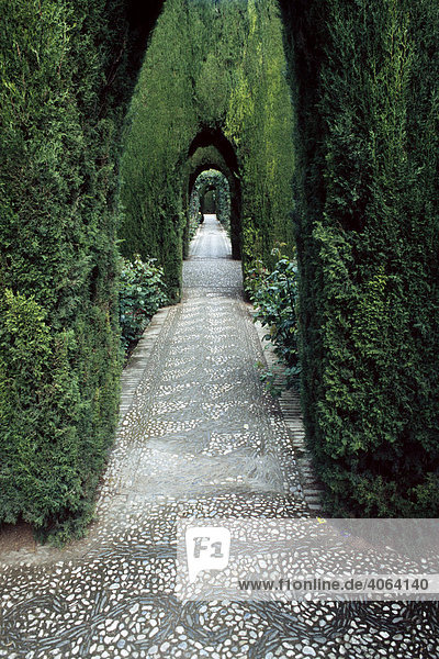 Tree-lined road in Alhambra  Granada  Andalusia  Spain  Europe