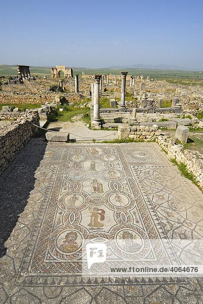 Mosaik im Gordischen Palast in der römischen Ruinenstadt Volubilis  Marokko  Afrika