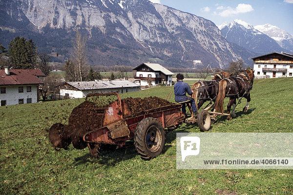 Bauernarbeit mit Pferden  Mist ausbringen  Kirchmair Hubert  Schwaz  Tirol  Österreich  Europa