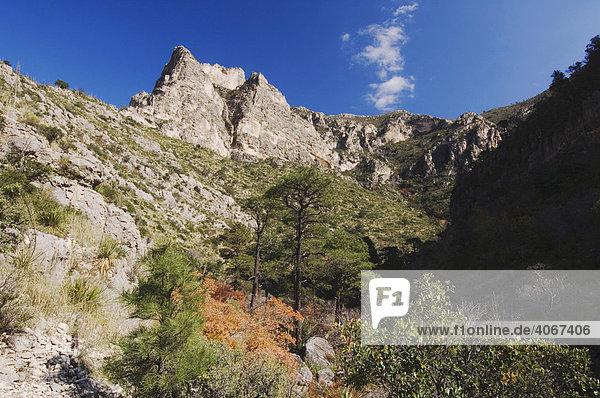 Berge und Felsschlucht  McKittrick Canyon  Guadalupe-Mountains-Nationalpark  West-Texas  USA