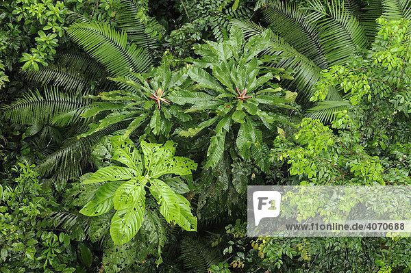 Regenwald aus der vogelperspektive am fluss rio napo ecuador s damerika lizenzpflichtiges - Vogelperspektive englisch ...
