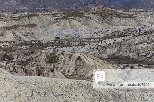 Wüstenlandschaft bei Abanilla  Region Murcia  Spanien  Europa