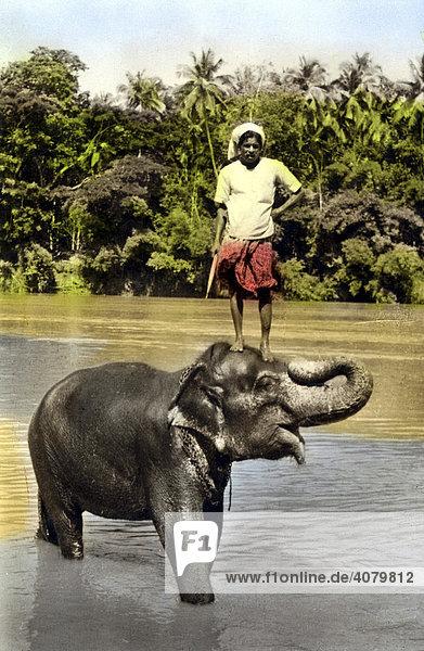 Historische Aufnahme  Inder auf Elefant  Indien  ca. 1910