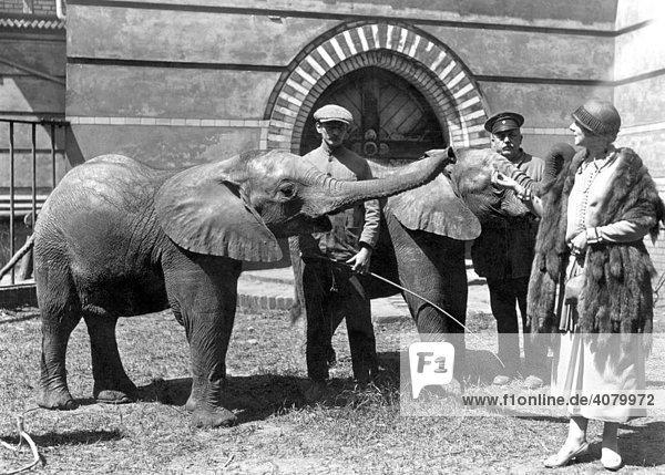 Historische Aufnahme  Elefanten im Zoo  ca. 1925