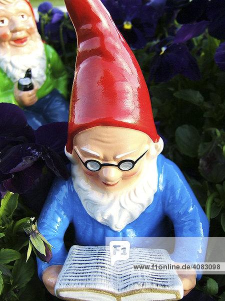 Lesender Gartenzwerg im Garten