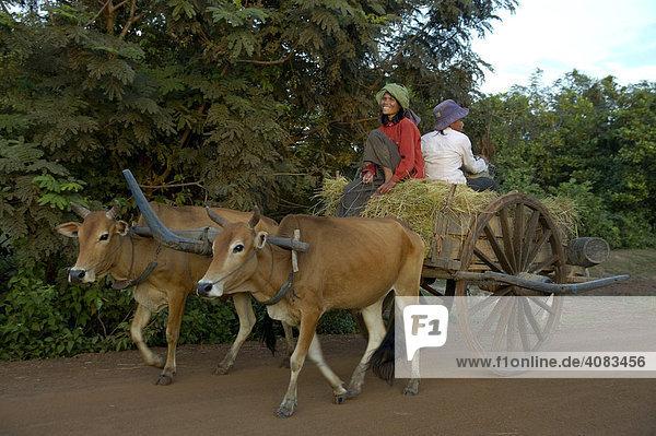Archaischer Transport Frauen auf Ochsenkarren bei Kompong Thom Kambodscha