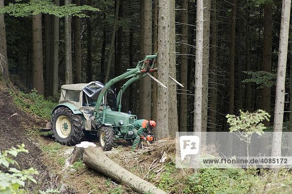 Holzarbeiten im Wald Traktor bei Holzfäller Arbeit Baum fällen