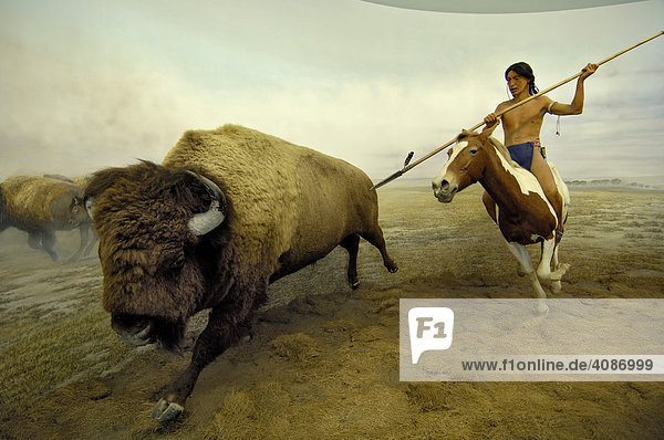 jagender indianer und bison bueffel ueberseemuseum bremen deutschland lizenzpflichtiges bild. Black Bedroom Furniture Sets. Home Design Ideas