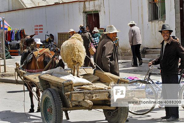 Streets scene with sheep on cart  Gyantse  Tibet