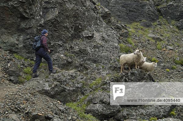 Raftagil Schlucht Südküste Island