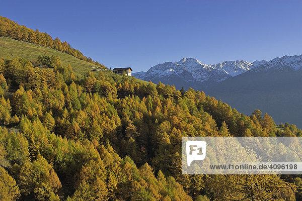 Bauernhof Herbstwald und Berge der Ortler Gruppe  oberhalb von Prad  Vinschgau  Südtirol  Italien