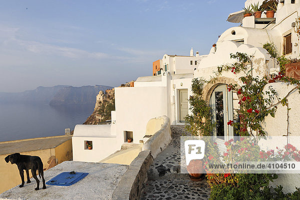 Houses in the typical cycladic architecture  Oia  Santorini  Greece
